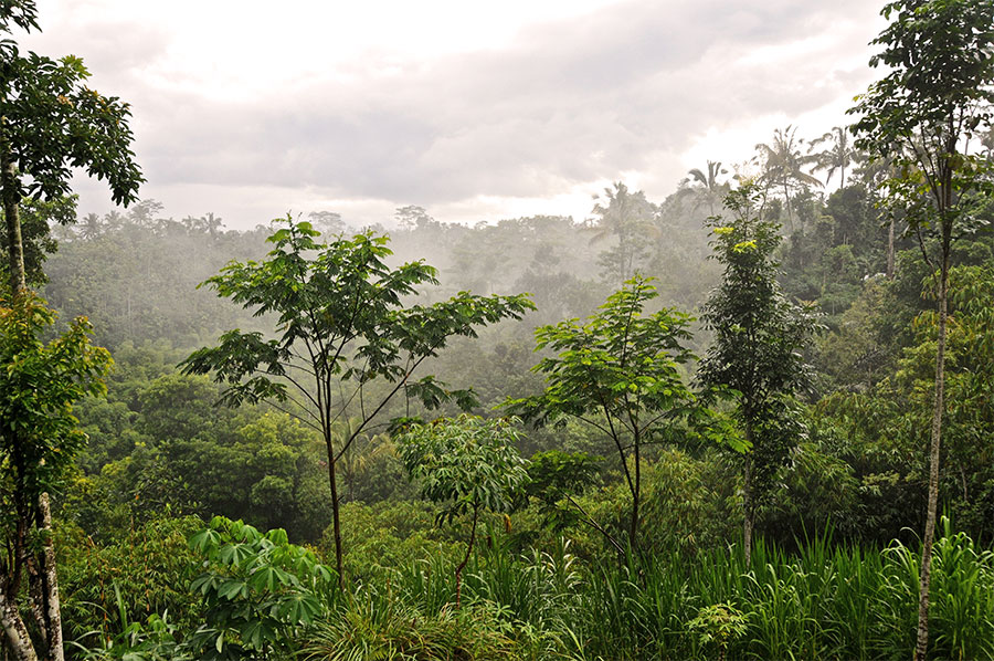 rainforest-paradise