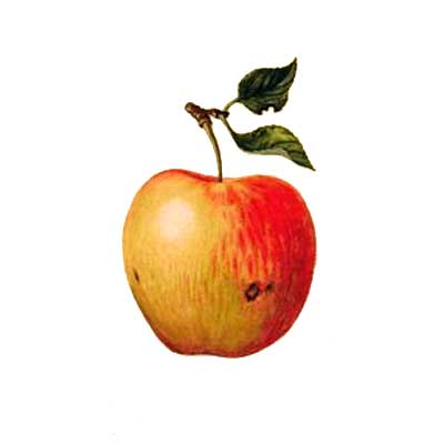 teachers-apple