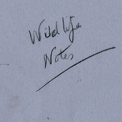 wild-life-notes